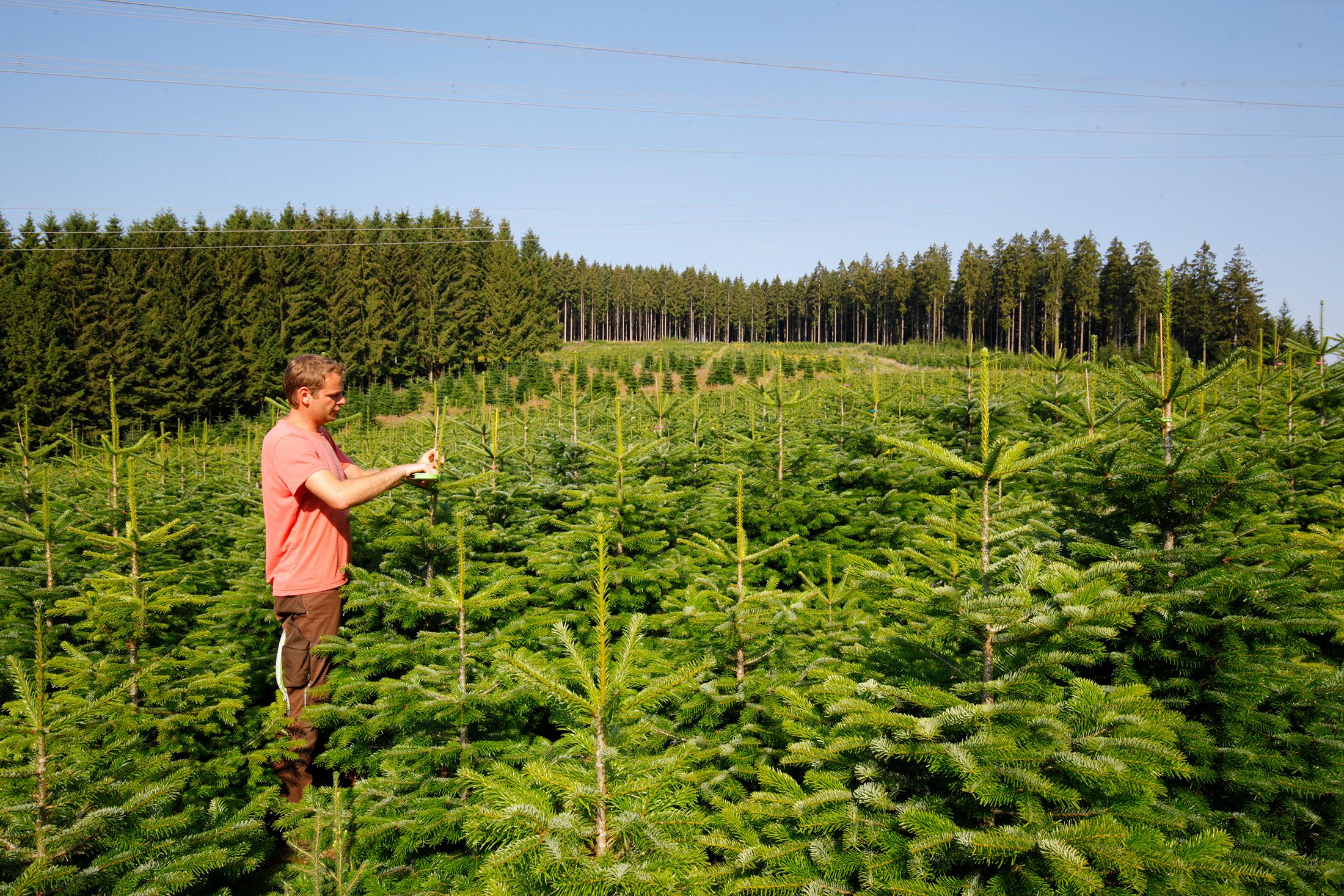 Weihnachtsbaum Schwerte.Steffen Röhrig Weihnachtsbäume Und Mehr